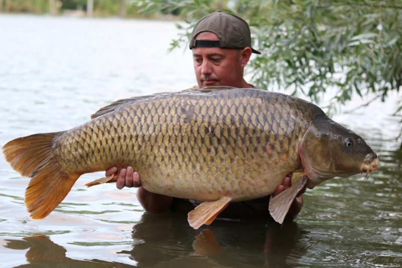 Jason Bell 52lb common