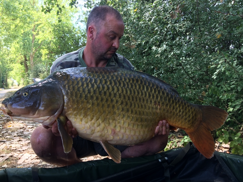 Warren Dodd 50lb common