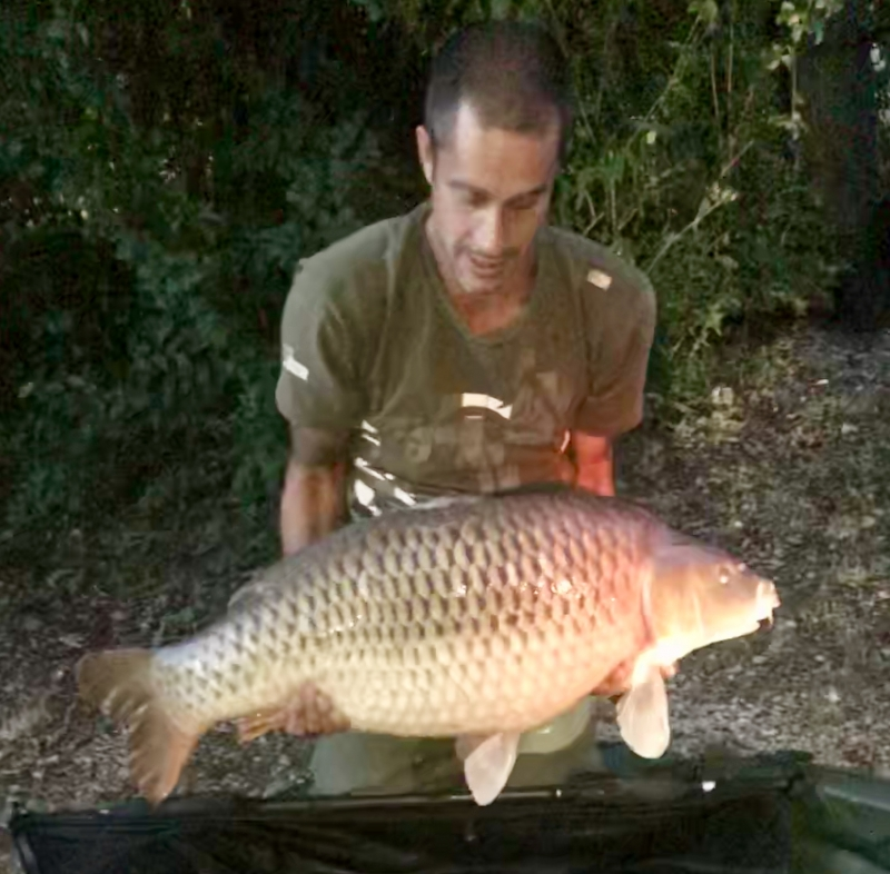 Nathan Bull 49lb common