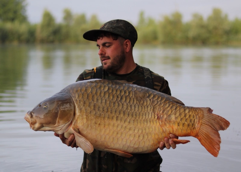 Ashley Caswell 53lb common